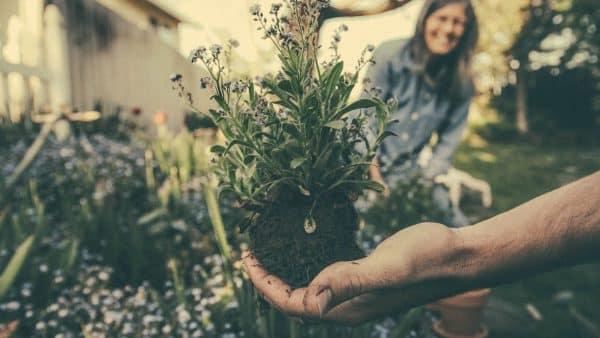 Pourquoi les Français sont-ils passionnés par le jardinage ?